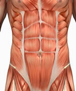 abs, abdominal, abdominals, rectus abdominis, gut, six pack, eight pack, washboard, waist, belly, core strength, stomach, lower abdominals Muscle Anatomy
